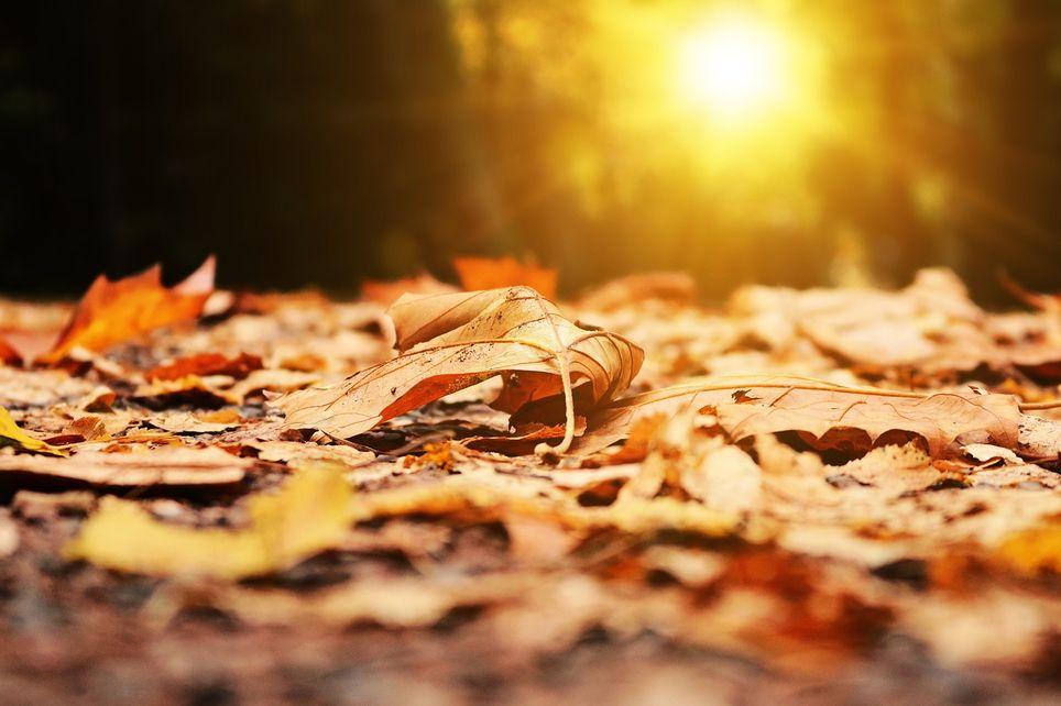 Es importante estar, al menos dos horas al día, expuestos a la luz natural
