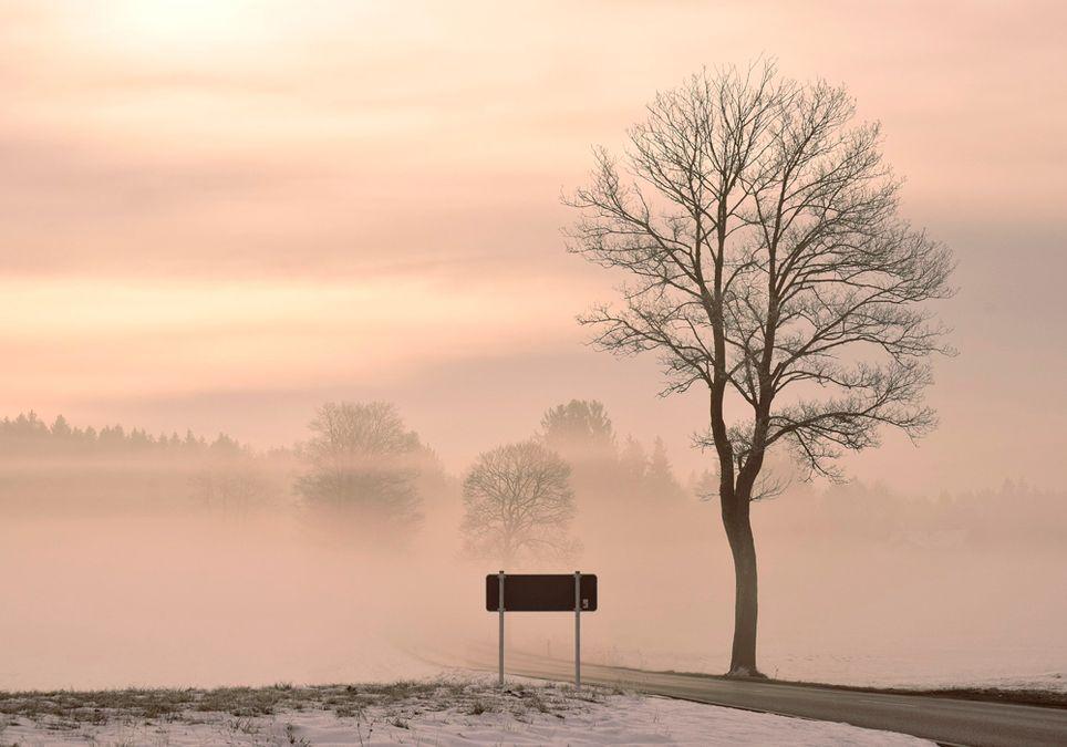 Niebla y carretera