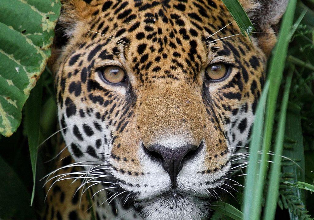 cambio climatico, extinción, desaparición, especies, naturaleza, animales, plantas