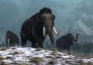Projeto de 15 milhões de libras visa trazer de volta o mamute-lanoso