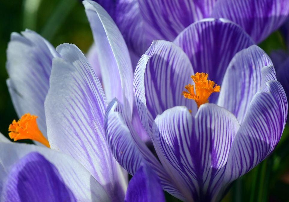 Frühling startet durch