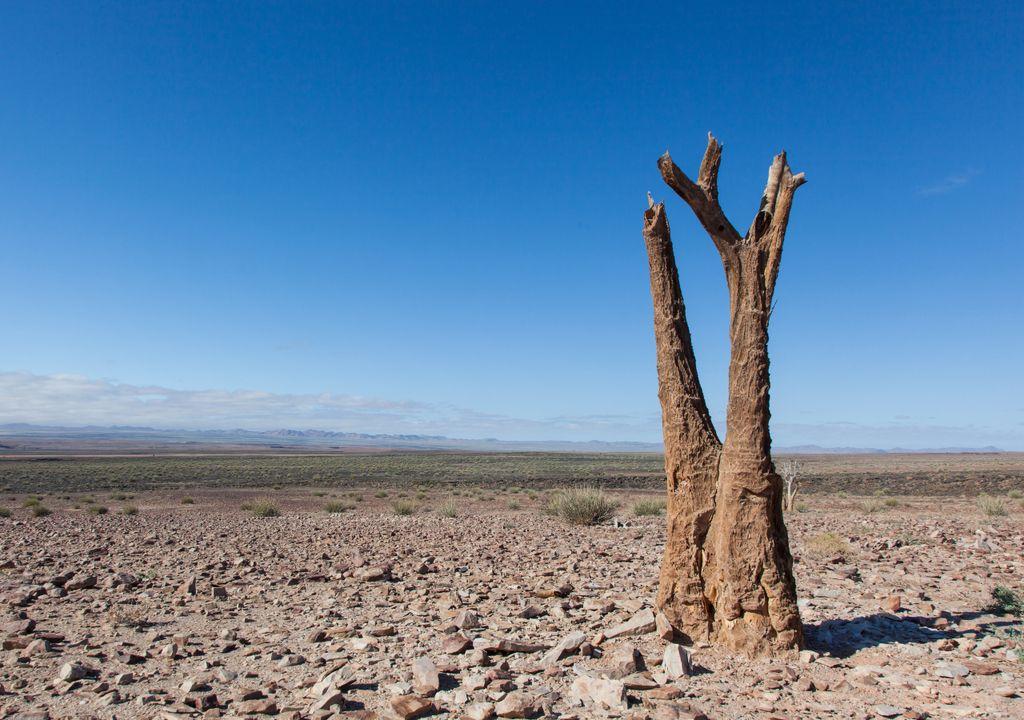 Dia Mundial de Combate à Seca e à Desertificação
