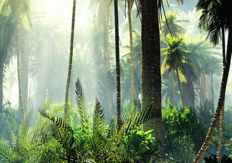 Tropical rainforests act as carbon sinks, accounting for temporary drops in atmospheric carbon dioxide levels.