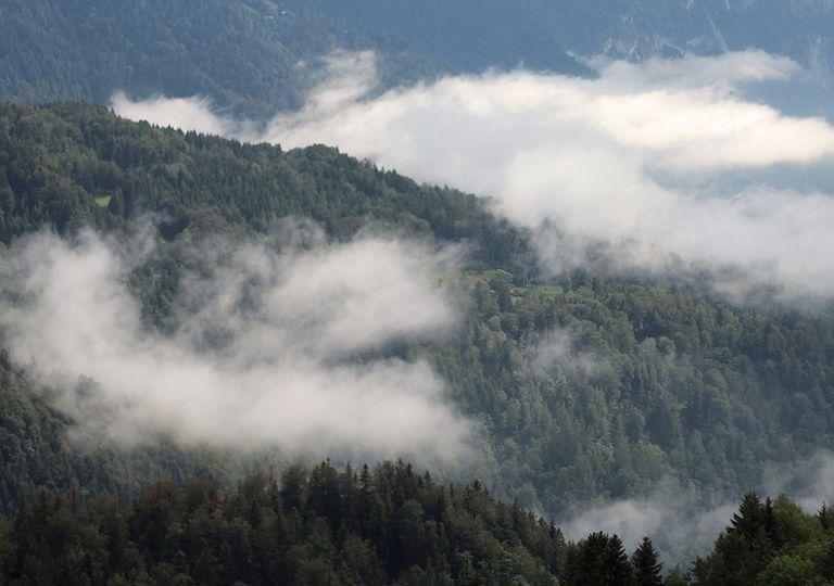 bosque y formación de nubes