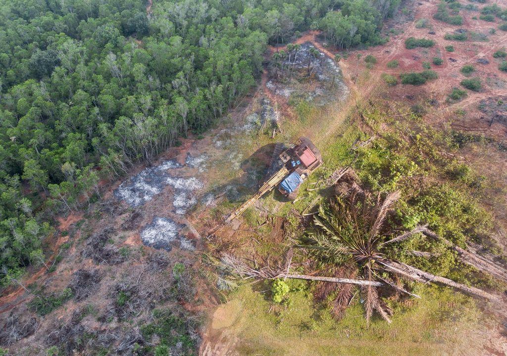 Deforestación y explotación