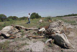 Una costosa sequía en Argentina