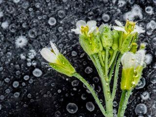 En otoño, muchas plantas se preparan para el invierno
