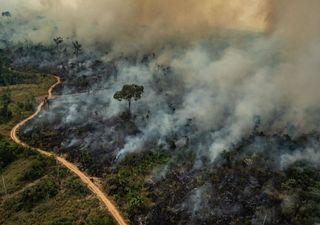 47 mil brasileiros são hospitalizados por ano devido a queimadas