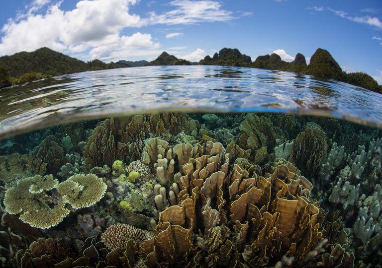 medio ambiente, biodiversidda, fauna, flora, oceanos