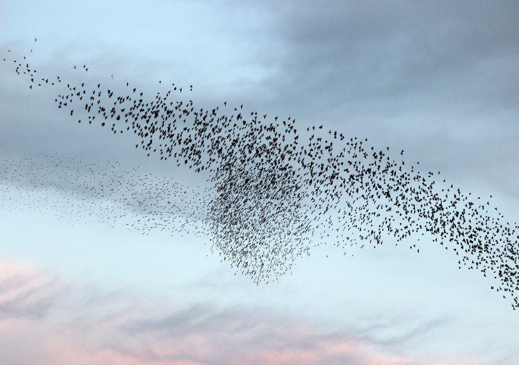 El vuelo de las aves migratorias