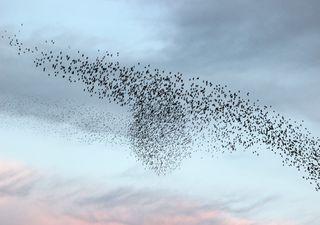 8 de mayo: Día mundial de las aves migratorias