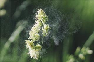 Nubes de polen