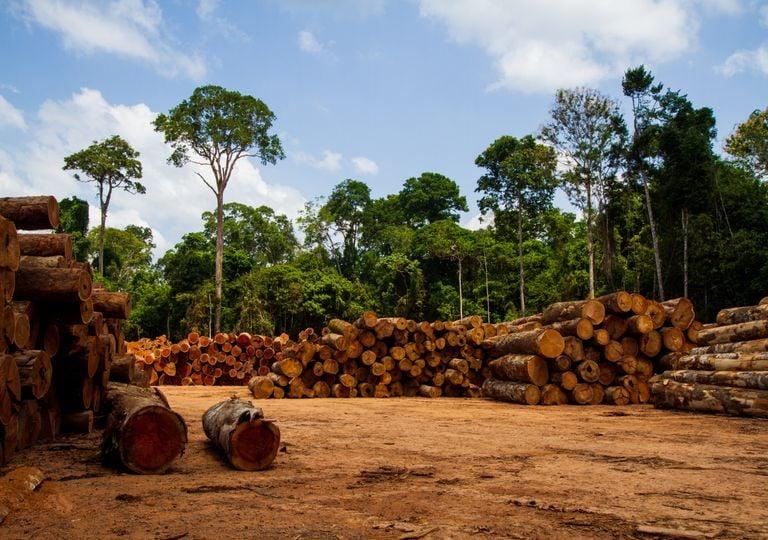 Marcas da desflorestação