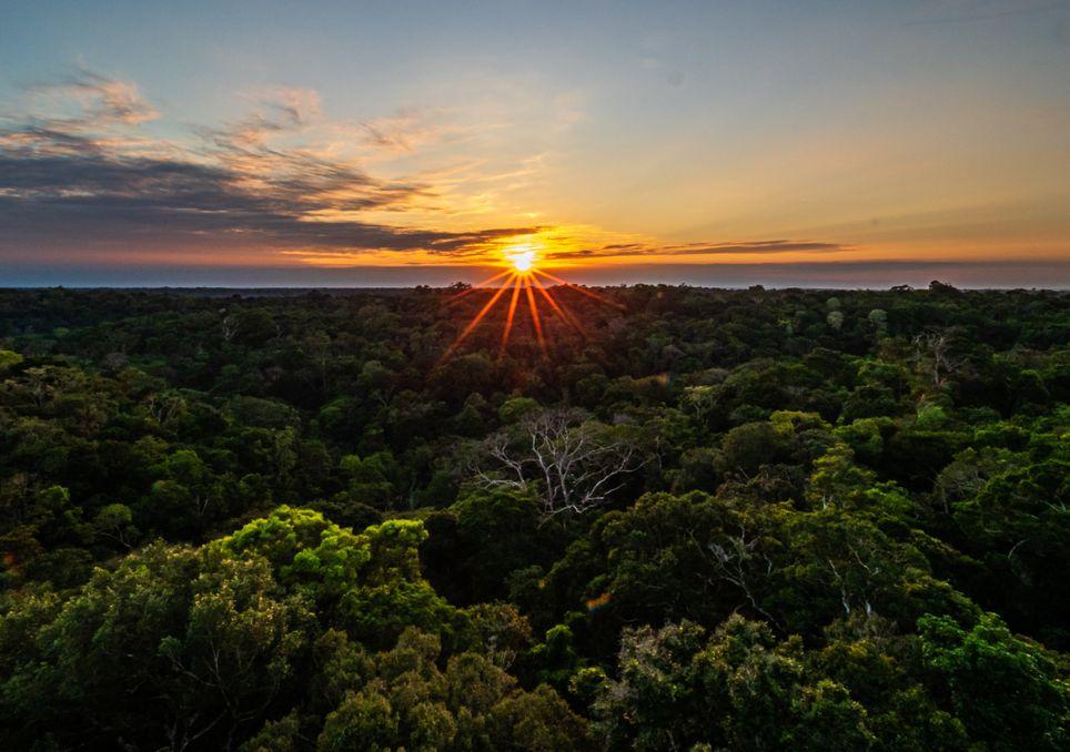 Abholzung im Amazonas und verstärkte Satellitenüberwachungssysteme.