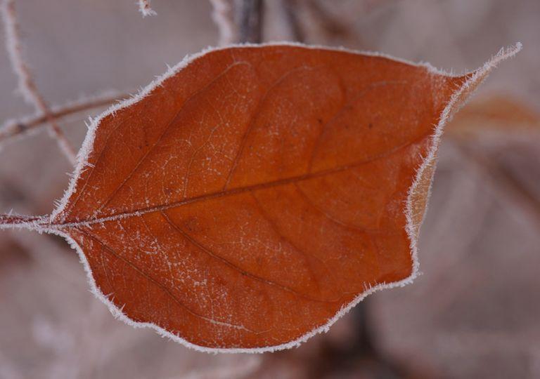 Frosty autumn days