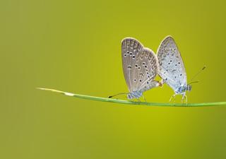 Les papillons jouent un rôle essentiel dans la nature !