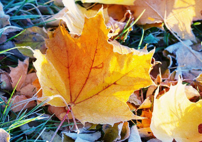 autumn frost.