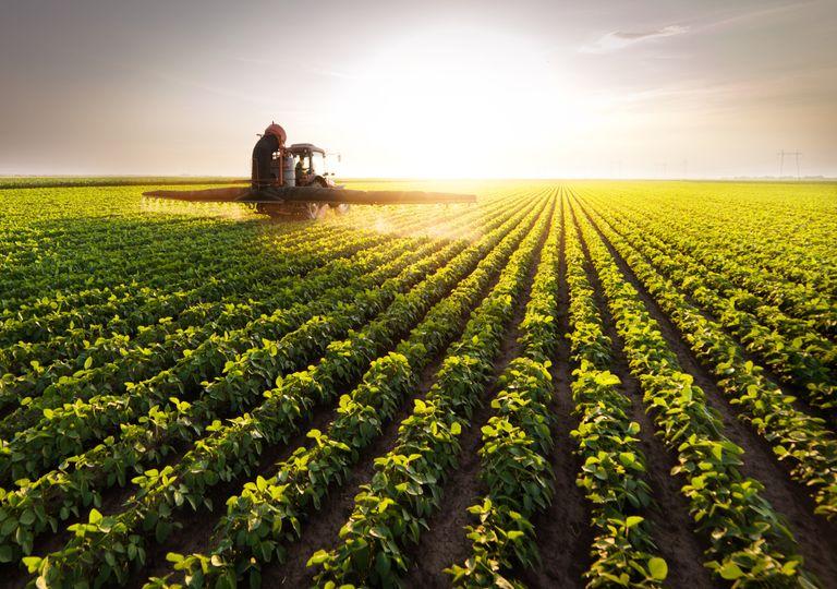 campo agrícola; agricultura; sustentabilidade