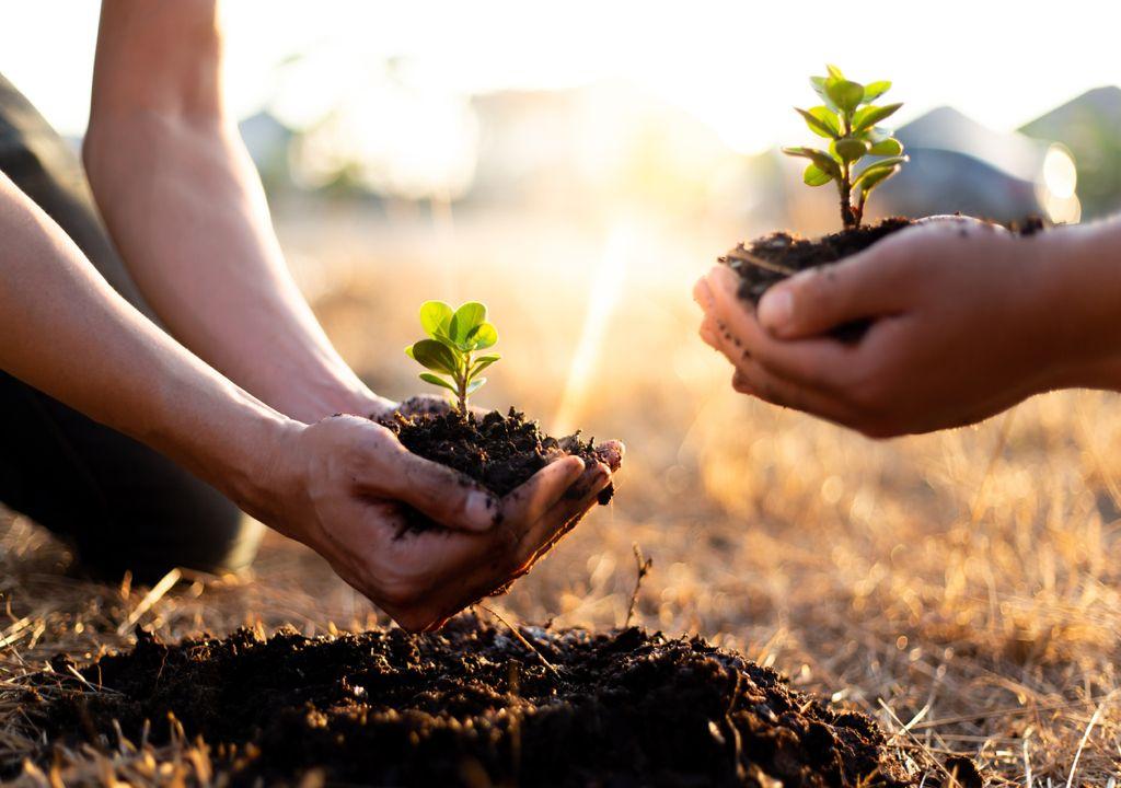 plantaciones de árboles