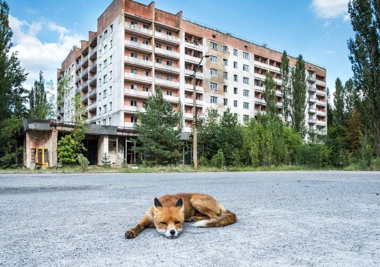 Chernobyl radiacion zona de exclusión