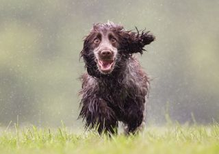 UK weather: Intense rain and strong winds this weekend
