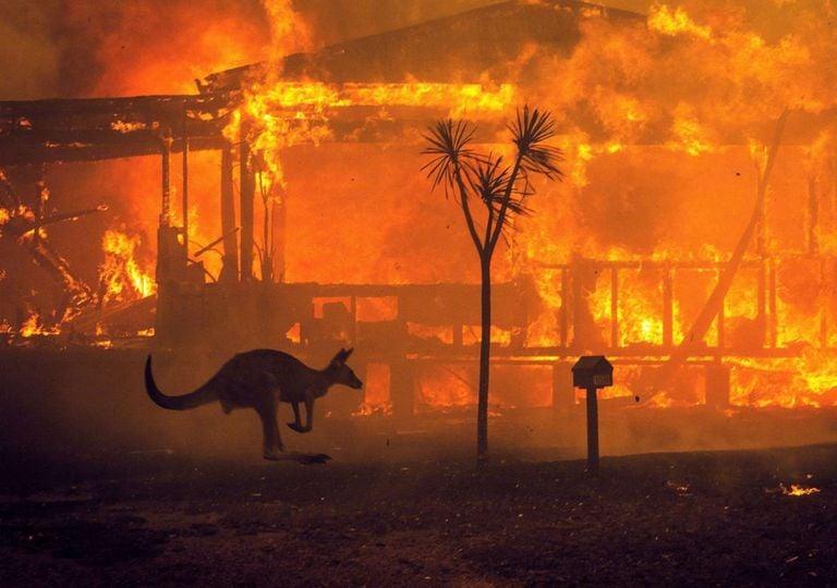 Animais mortos nos incêndios da Austrália