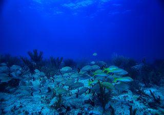 "A ""zona morta"" do Golfo do México está maior"