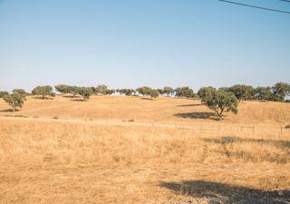 Agosto de 2021 foi um mês quente e seco em Portugal continental