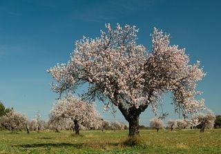 Ecco quali sono gli alberi che fioriscono a febbraio