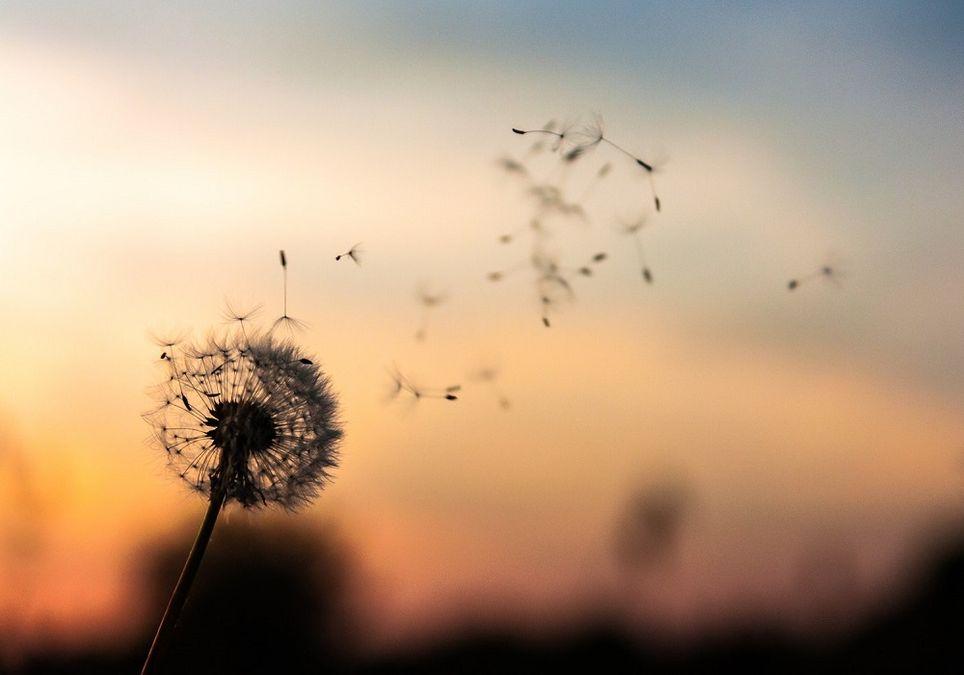 Alergia al cambio de tiempo, polen