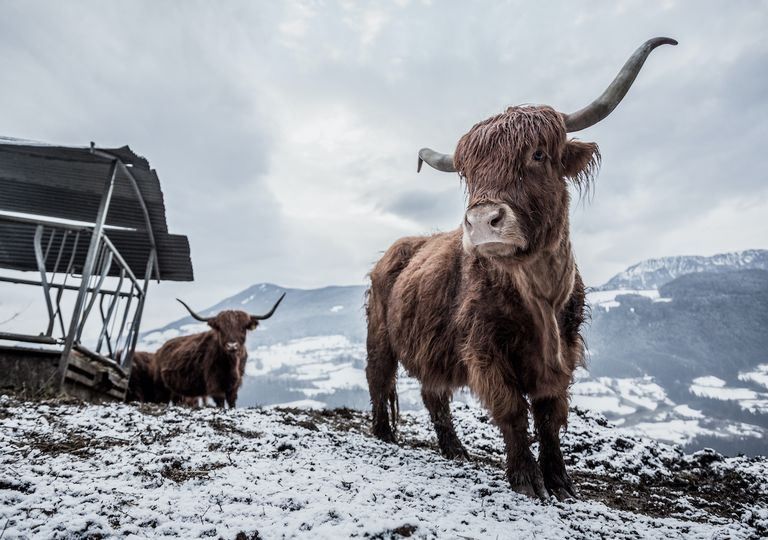 Snow is forecast for upland parts of Scotland.