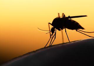 Alerta en Buenos Aires por invasión de mosquitos