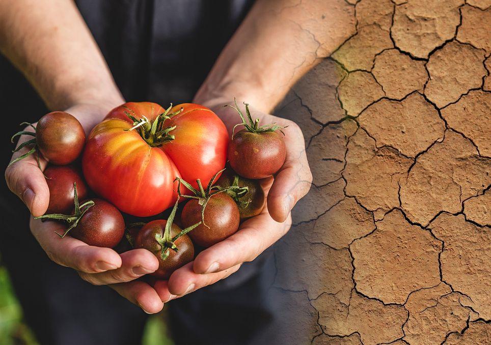 Emergencia climática agricultura