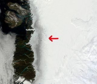Algas y derretimiento de Groenlandia