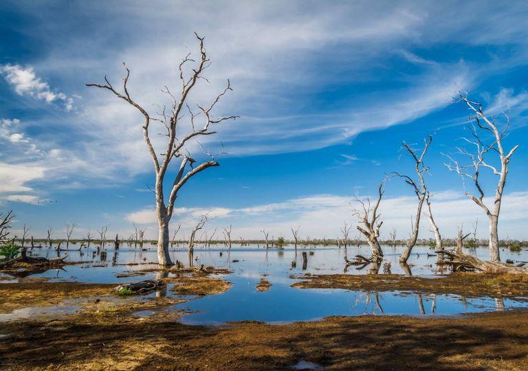 Zona húmida; árvores mortas; seca