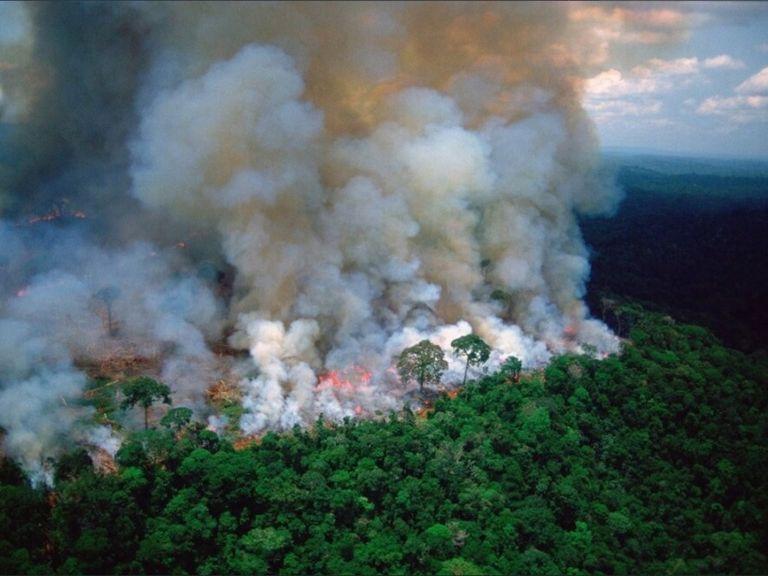 Amazonas Incendios forestales PrayforAmazonas