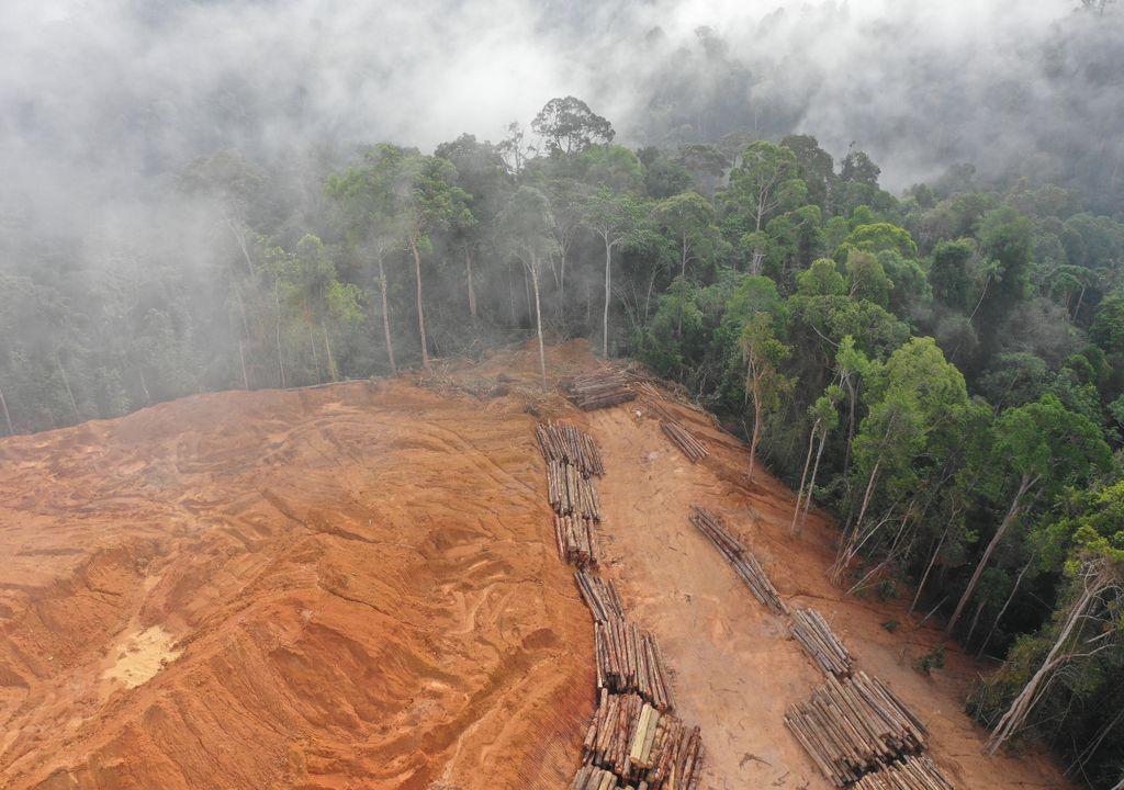 gefällte bäume, amazonas