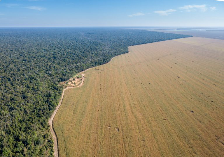 desflorestação; alterações climáticas; Amazónia
