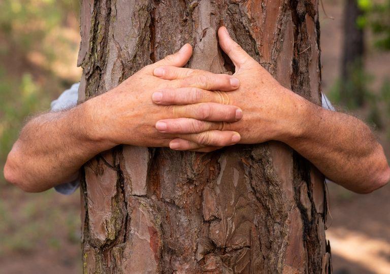 Deforestación bosques Global Forest Watch