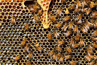 Año de oro de los apicultores albaneses gracias al coronavirus
