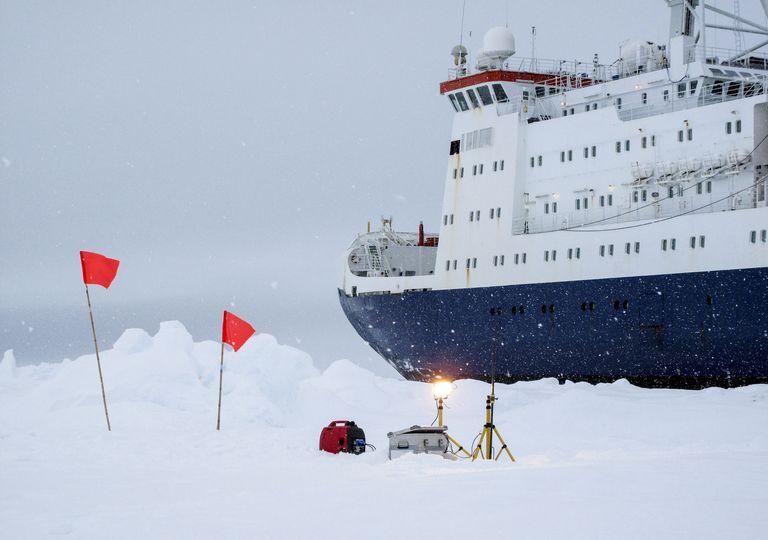 Découverte créature antarctique