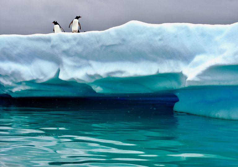 Pinguinos sobre hielo en la Antártica