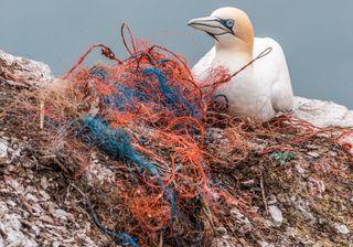 Apenas 13% do oceano se mantém intocado pelo homem