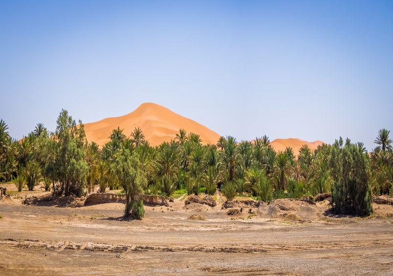 Árboles sobre el desierto del Sahara