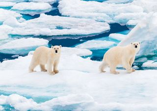 Arctic sea ice level at second-lowest on record