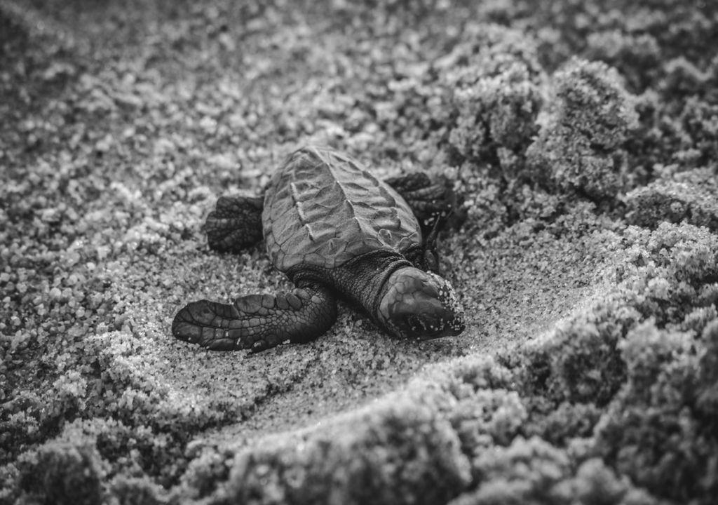 As AC e as Tartarugas Marinhas