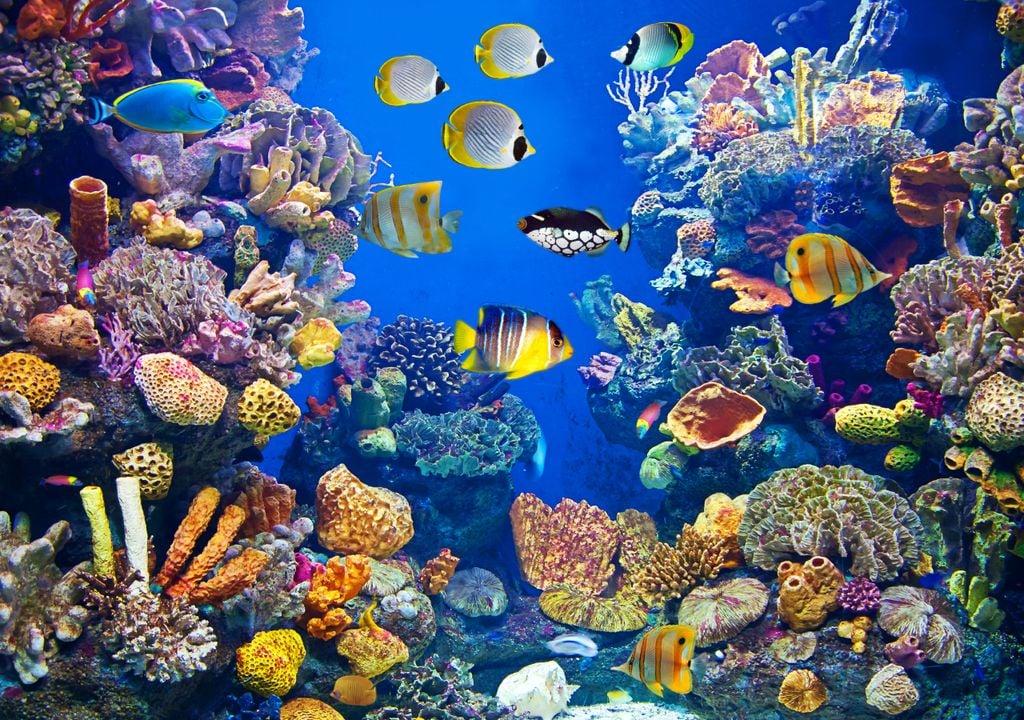 espécies marinhas; alterações climáticas; migração