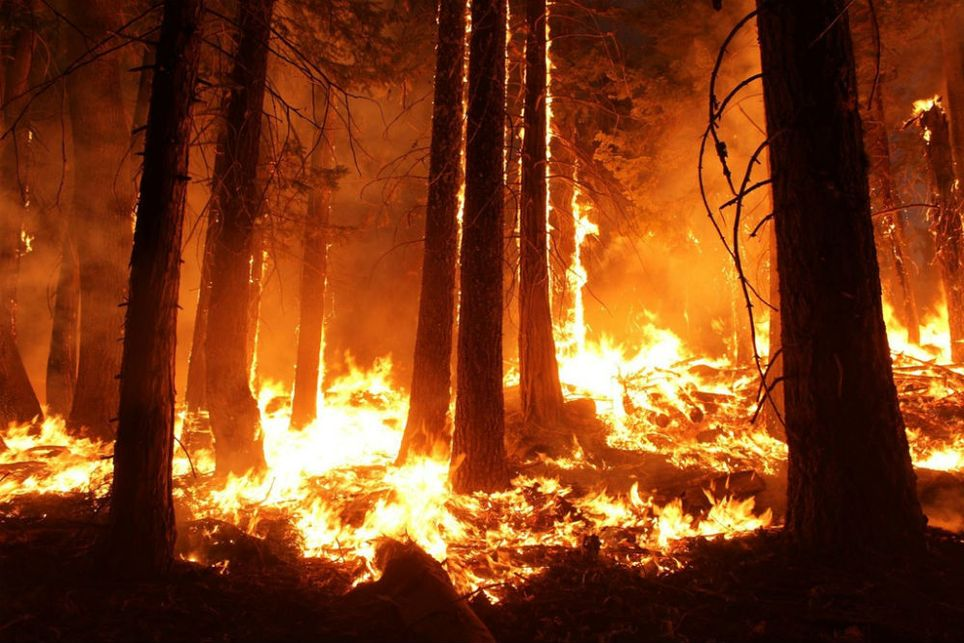 As geociências e o futuro: incêndios florestais e alterações climáticas discutidos em Viena