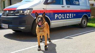 Asfalto derretido y perros con zapatos: Europa se tuesta