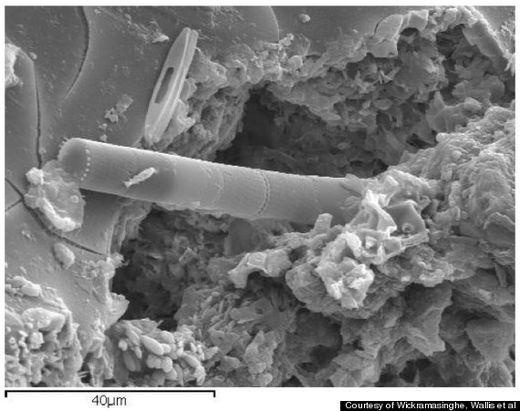 Astrobiólogo Afirma Haber Encontrado Prueba De Vida Extraterrestre En Un Meteorito